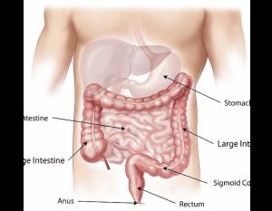 Small intestine diagram